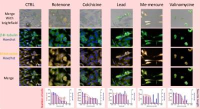 Poster - Neurotoxicity assay using High Content Screening technology